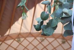 Eucalyptus in Yurt for wedding