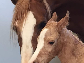 Flash: New foal for Susan Gillen