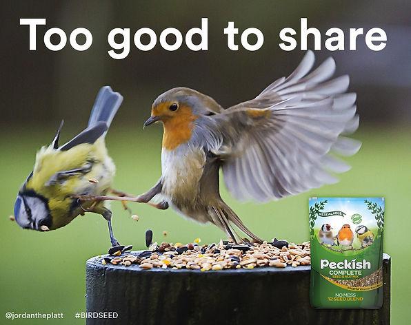 oneminutebriefbirdseed.jpg