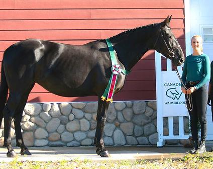 ulterra queen lat ribbon2.jpg