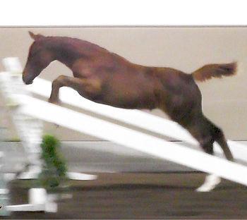 ulterra gl'amour jump.jpg