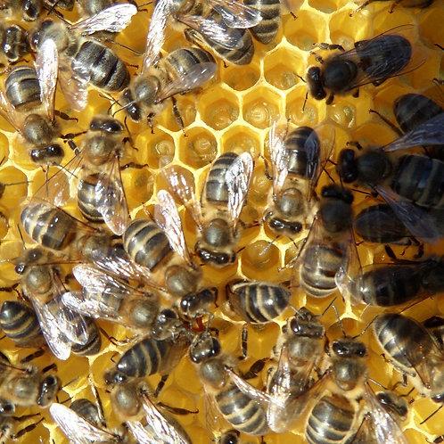 Apadrina una colmena + 5 Kilos de miel