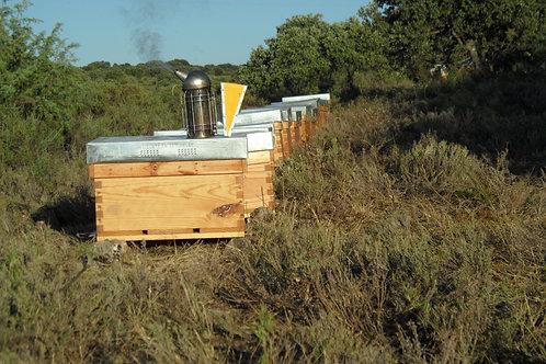 Apadrina una colmena + 10 Kilos de miel