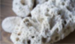 珊瑚のいぶき