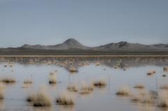 Arizona, Desert