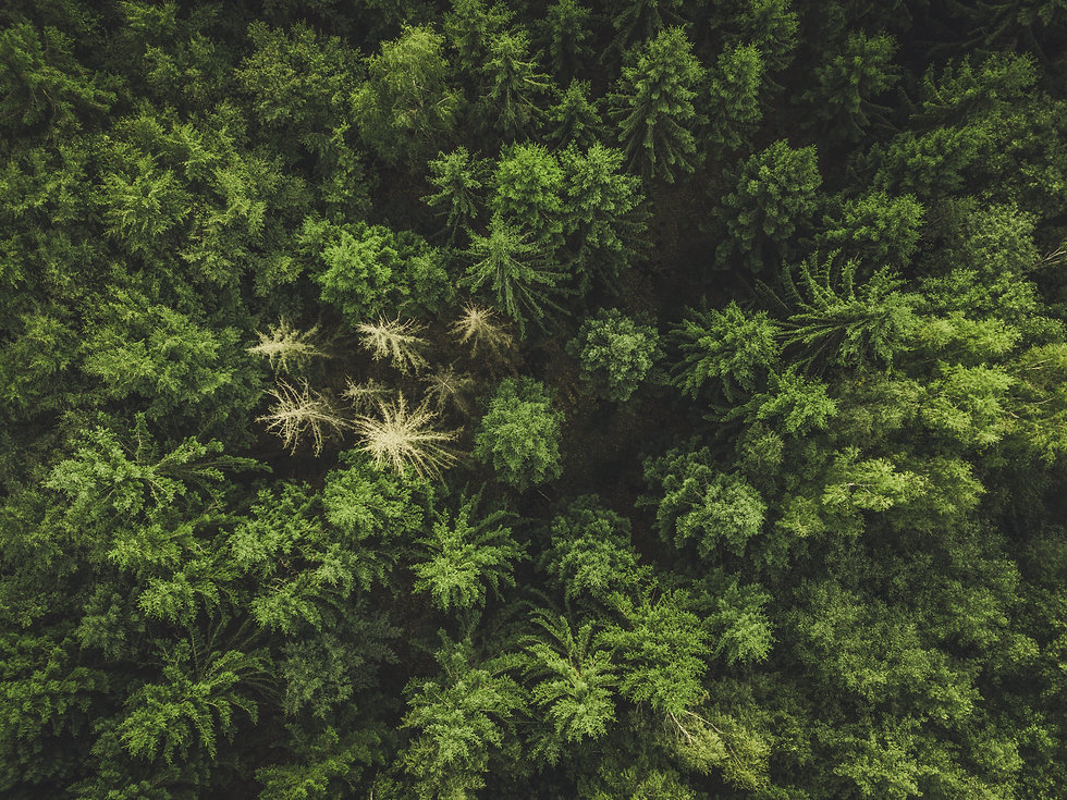 Aerial view forest, texture of forest vi