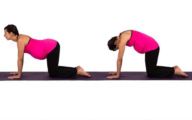 pregnant woman on all 4's does cat cow yoga pose