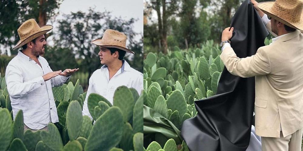 cactus, Mexique, cuir végétal