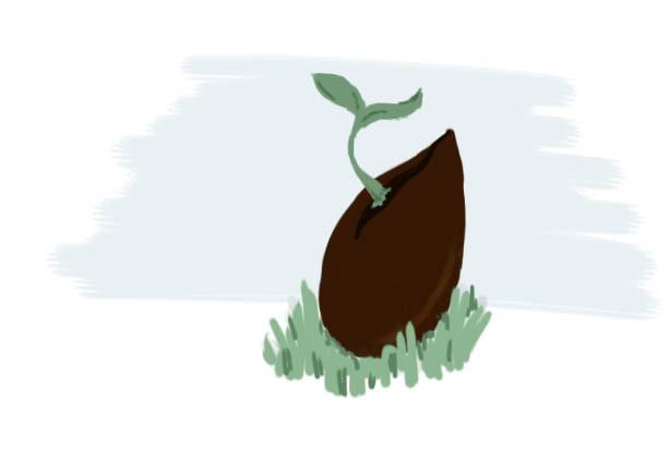 gezeichneter Kern im gras mit austretendem Spross