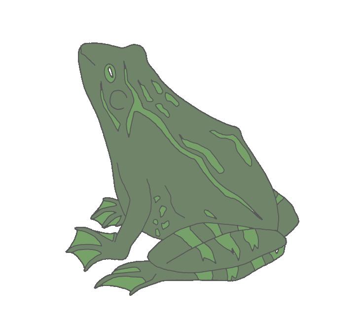 Grüner Grasfrosch