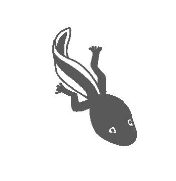 Kaulquappe mit ersten Hinterbeinen