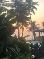 palm retreat