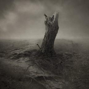 enzo-tedeschi-fotografia-storie-di-albere. tedeschi - storie di alberi 02