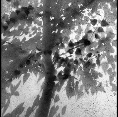 shadow tree maciel botman 03