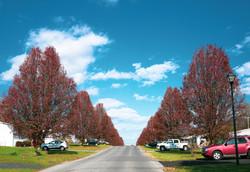 Purple Trees.jpg