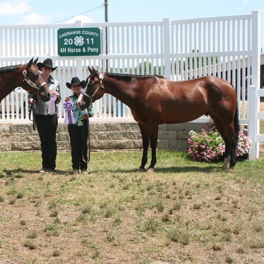 2011 Fair - Tuesday - July 12 142 - Mare