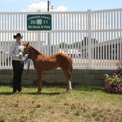 2011 Fair - Tuesday - July 12 116 - Colt