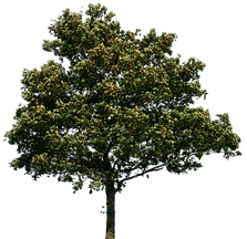 4-tree-png-image-download-picture.png