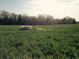 Dogs field no crop.jpg