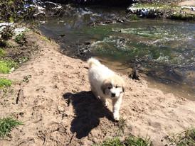 creek puppy 2.jpg
