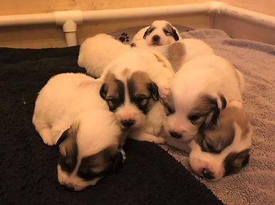 Puppy wk 2 best edit 2.jpg