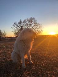 Nali Sun.jpg