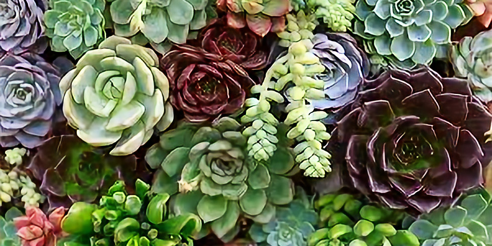 Choose your own adventure-- Succulent style!!