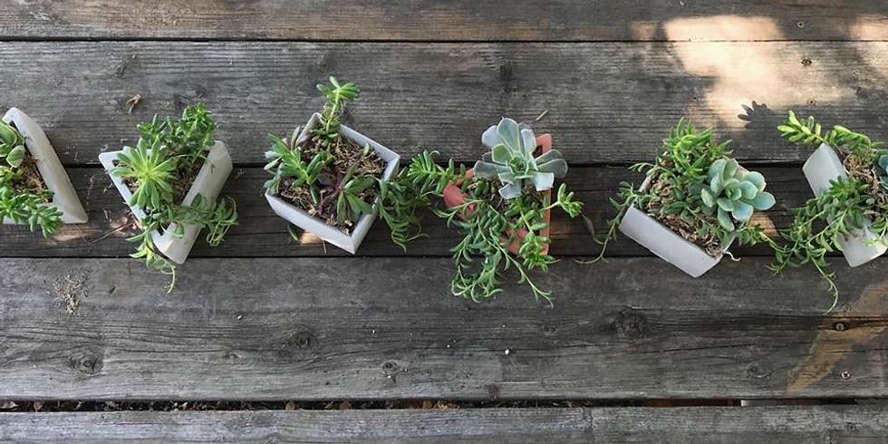 Hand Poured Pot Succulent workshop