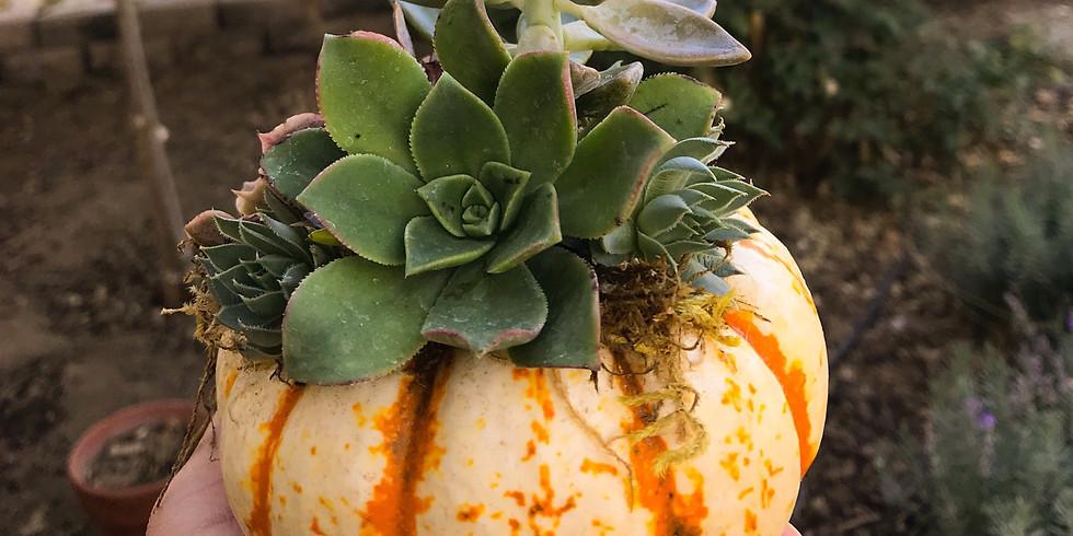 Socially Distanced Succulent Pumpkins