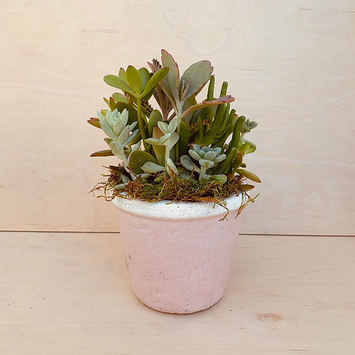 Blushing Pot with Plant