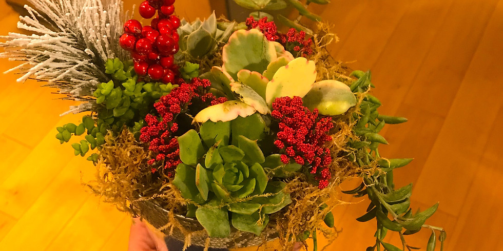 Holiday Succulents at Triassic