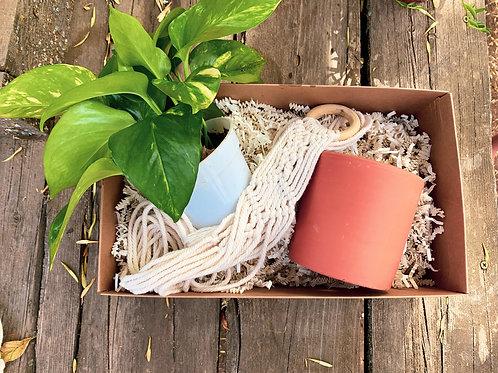 Pothos Hanging Gift Box