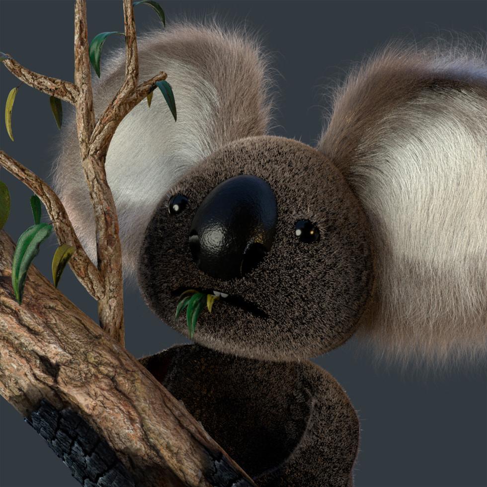 Help Australia bush fires!