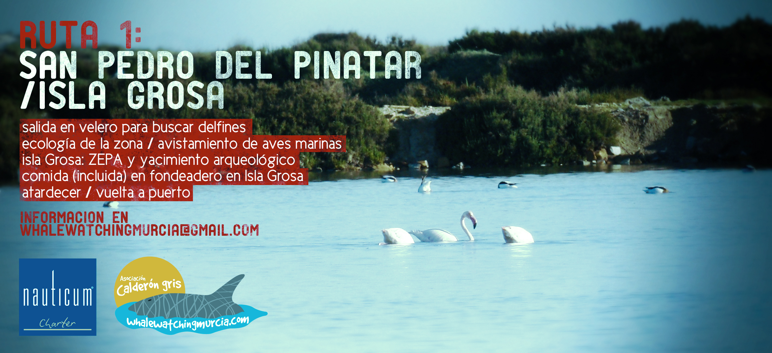San Pedro avistamiento de cetáceos