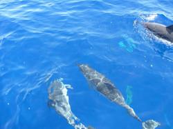 Facebook - Delfines listados