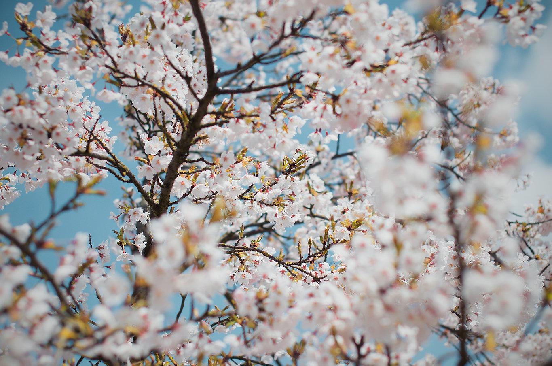 Spring leaves.jpg