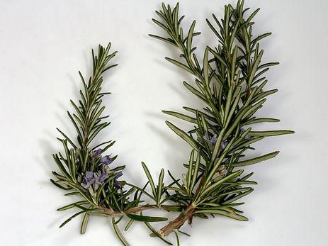 Rosemary branch.jpg