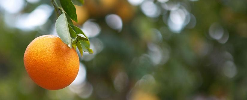 single-orange-1880-x-760.jpg