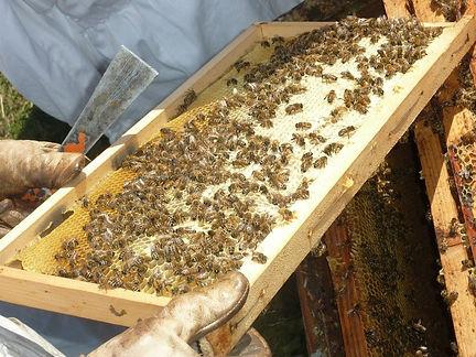 Le rucher aux marmottes agro.jpg