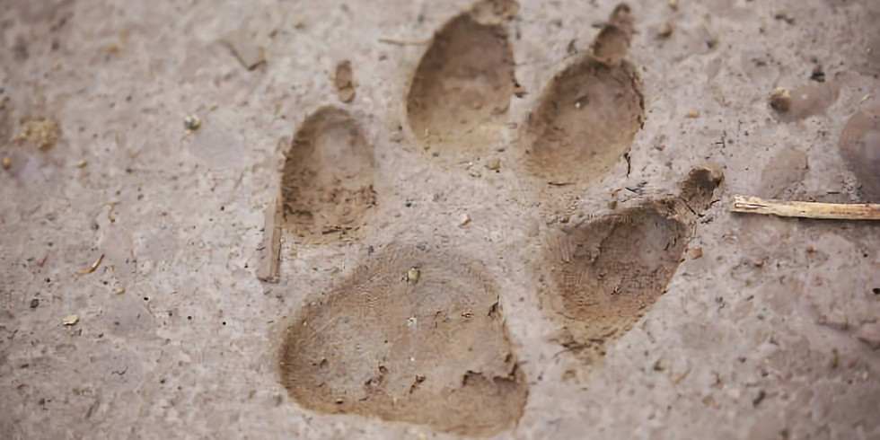 Sur les pattes du Loup