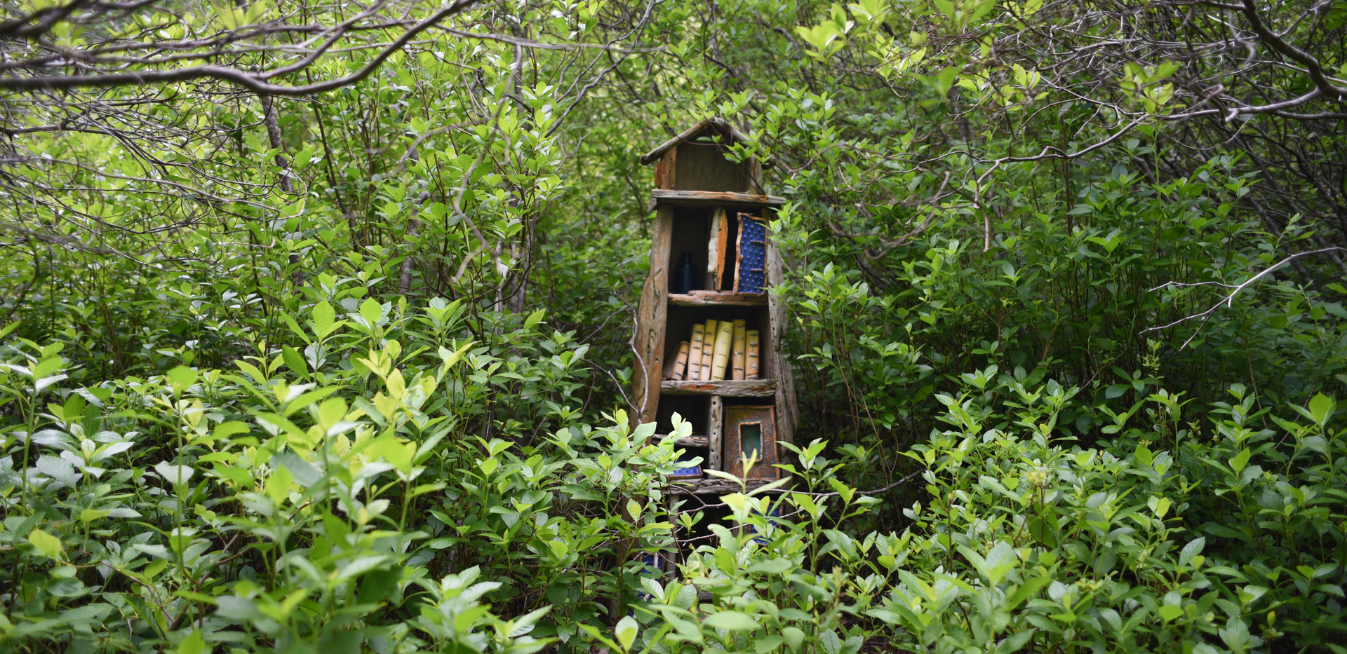The Woodland Book Case