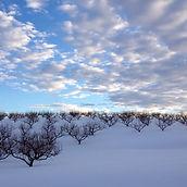 Orchard&Sky.jpg