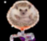 kisspng-european-hedgehog-four-toed-hedg