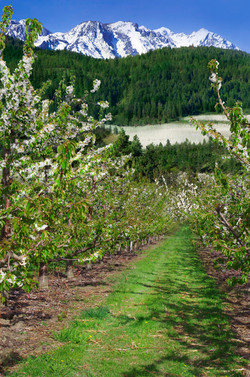 "Framed orchard scene (10"" wide).jpg"