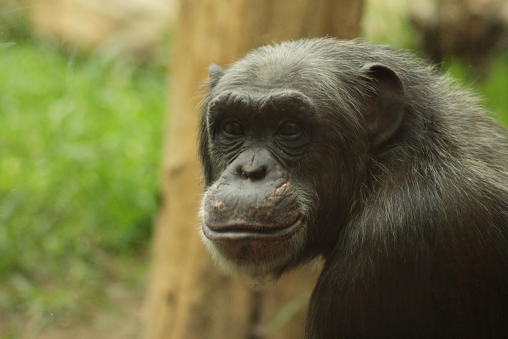 monkey-757210_1920.jpg