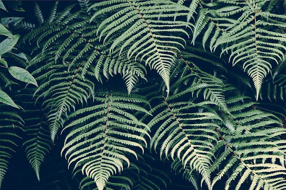 nature-605506_1280.jpg