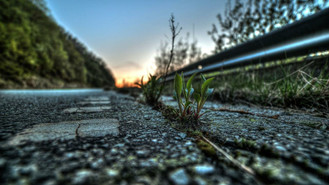Uma pétala na calçada