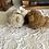 Thumbnail: Set Vintage German Teddy Bears