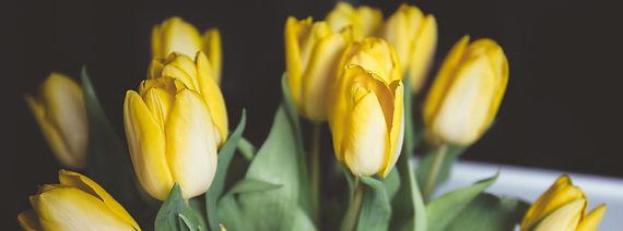 tulips-1208205_1920.jpg