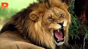 I Am Author, Hear Me Roar: Why you should stop calling yourself an aspiring author